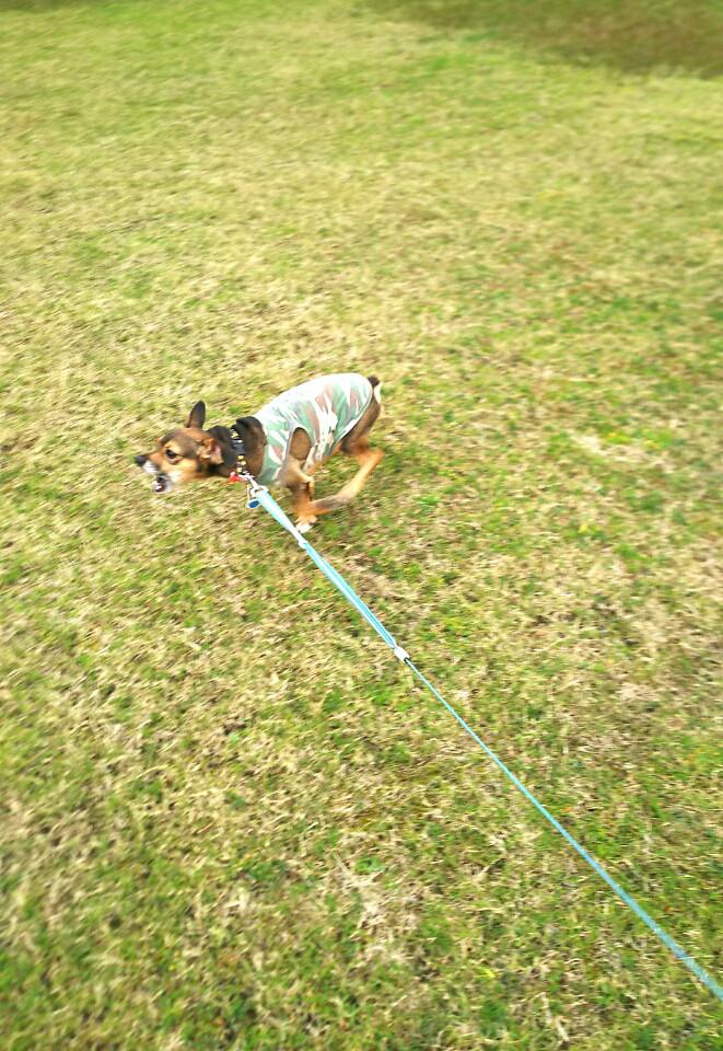 キングアガリクス 犬
