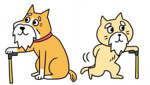 高齢犬、猫
