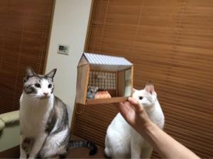 ネコちゃん&ハムちゃん