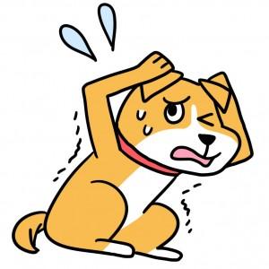 犬、ストレス