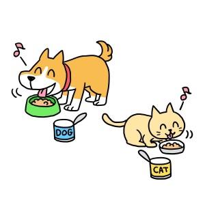 犬、猫食事