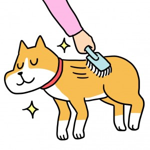 犬 ブラッシンング