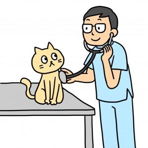 0502猫受診