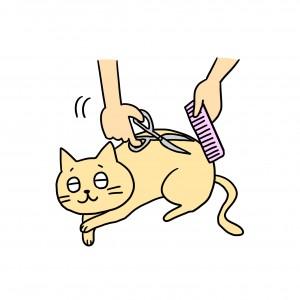 猫 カット