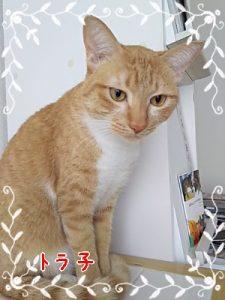 3枚目の猫の写真