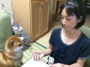 犬と飼い主さん