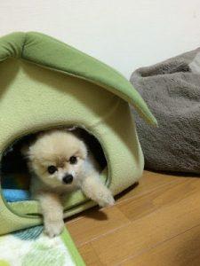 犬の写真4
