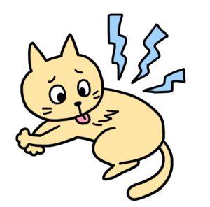猫の真菌症