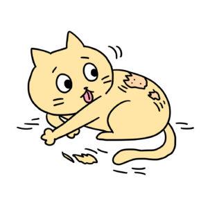 猫の脱毛症