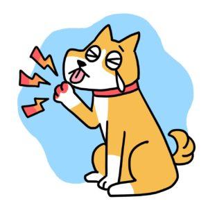 犬 指間炎 イラスト