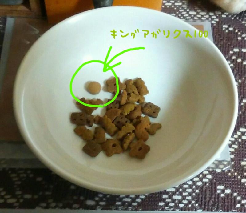 キングアガリクス 猫 ご飯