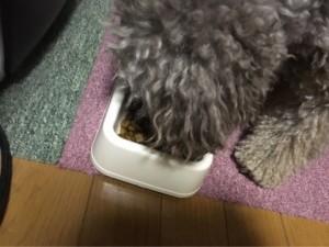 犬 ご飯 キングアガリクス100