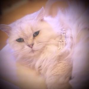 シニアの猫