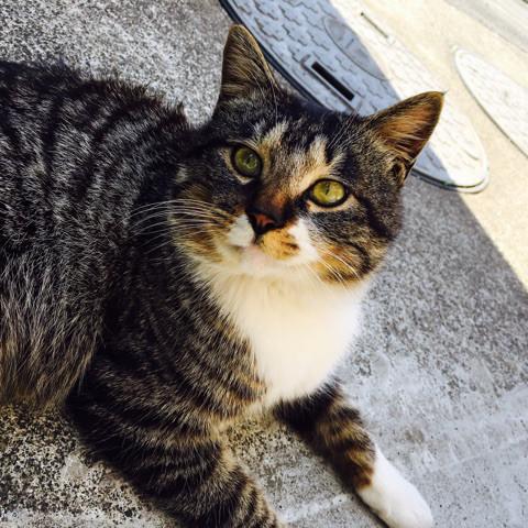 キングアガリクス 猫