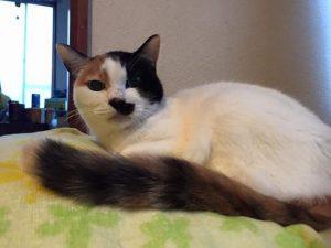 19歳のシニア猫