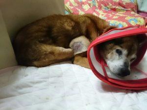 脂肪腫が心配な犬