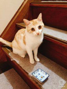 猫 キングアガリクス100