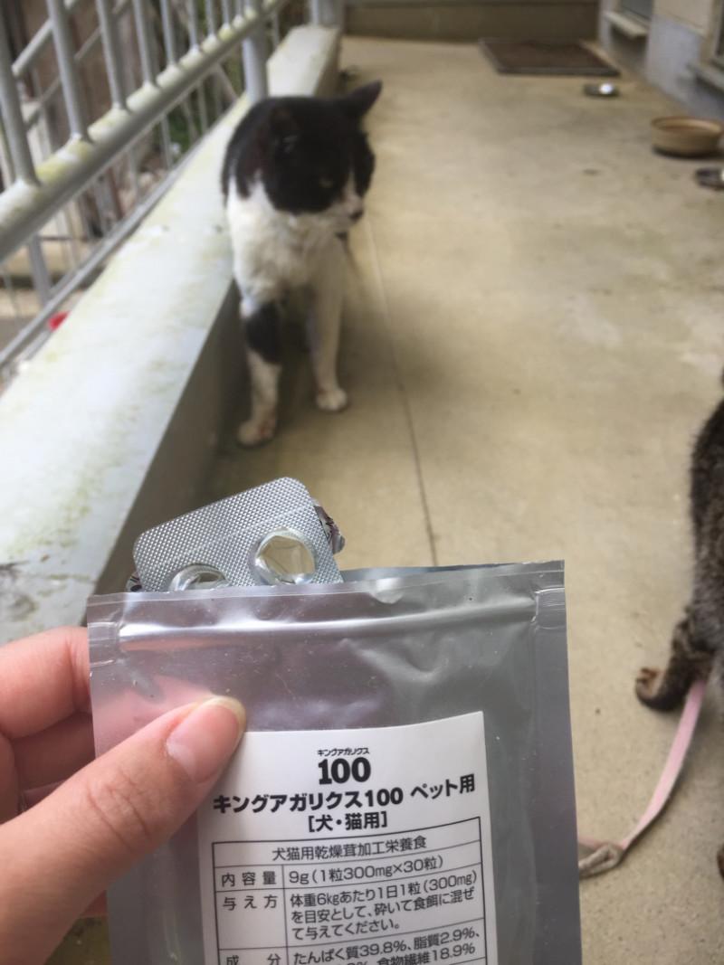 ねことキングアガリクス100