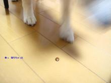 犬とサプリ