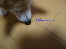 犬が食べている2