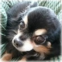 犬の写真2