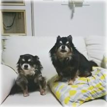 2匹のシニア犬